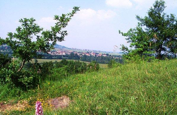Panorama sur Drevant